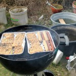 Angrillen, Phase 1
